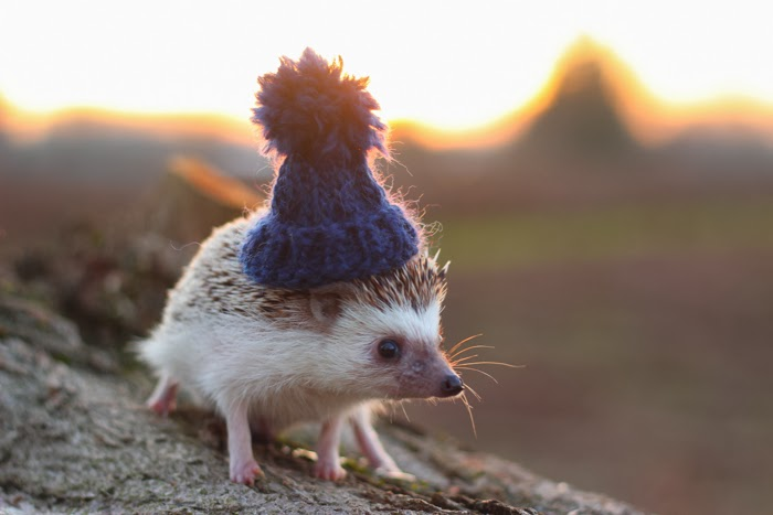 Picture of a cute hedgehog in a hat